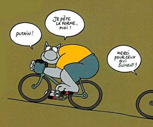 le_chat_velo.jpeg
